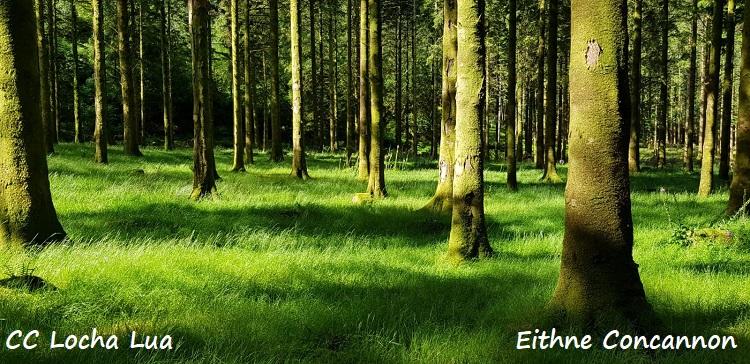 Eithme 2 (1)