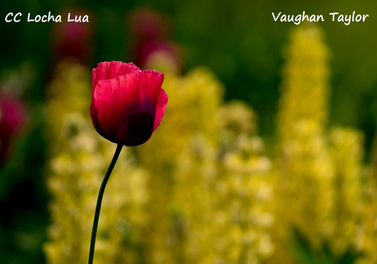 Vaughan 1 (1)